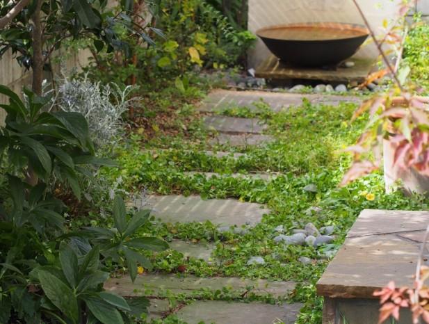 kitanagoya_y6緑のカーペットの中を歩く