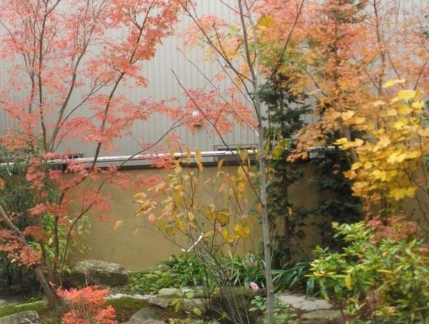 atuta_m11ダンコウバイの黄色、モミジの赤ガマズミにハクモクレン色とりどりの紅葉