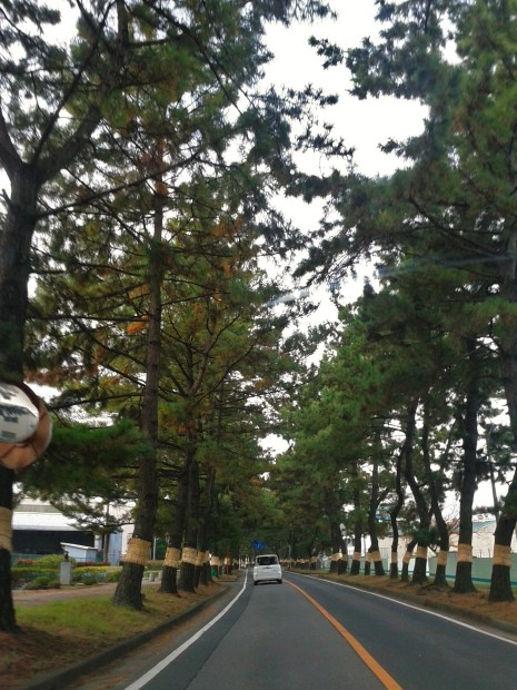 知立の松並木