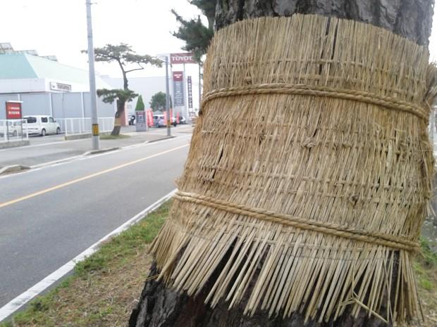 安城の松並木