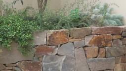 nissinn_n2庭の奥に石積みとオリーブの組み合わせ。衝立の奥に物置を隠して (2)