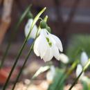 早春の花の写真