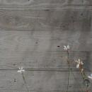 木目コンクリートの写真