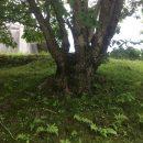 雑木の庭の今の写真
