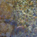 池のある庭の写真