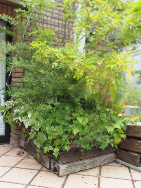 枕木の花壇を直す