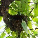 小鳥の来る日の写真