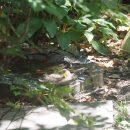 バードバスのある庭の写真